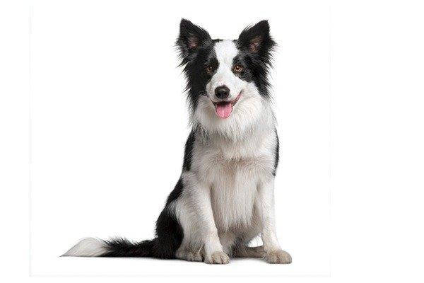 Un perro con fondo blanco